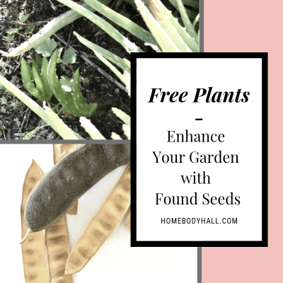 Free Plants - Enhance Your Garden with Found Seeds