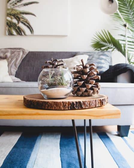 Pine cone, wood round, terrarium with air plants on table