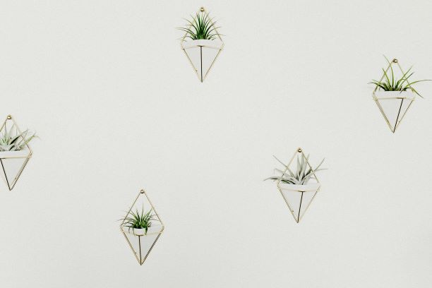 triangular succulent holders on wall