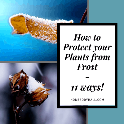 How to Protect your Plants from Frost - 11 ways